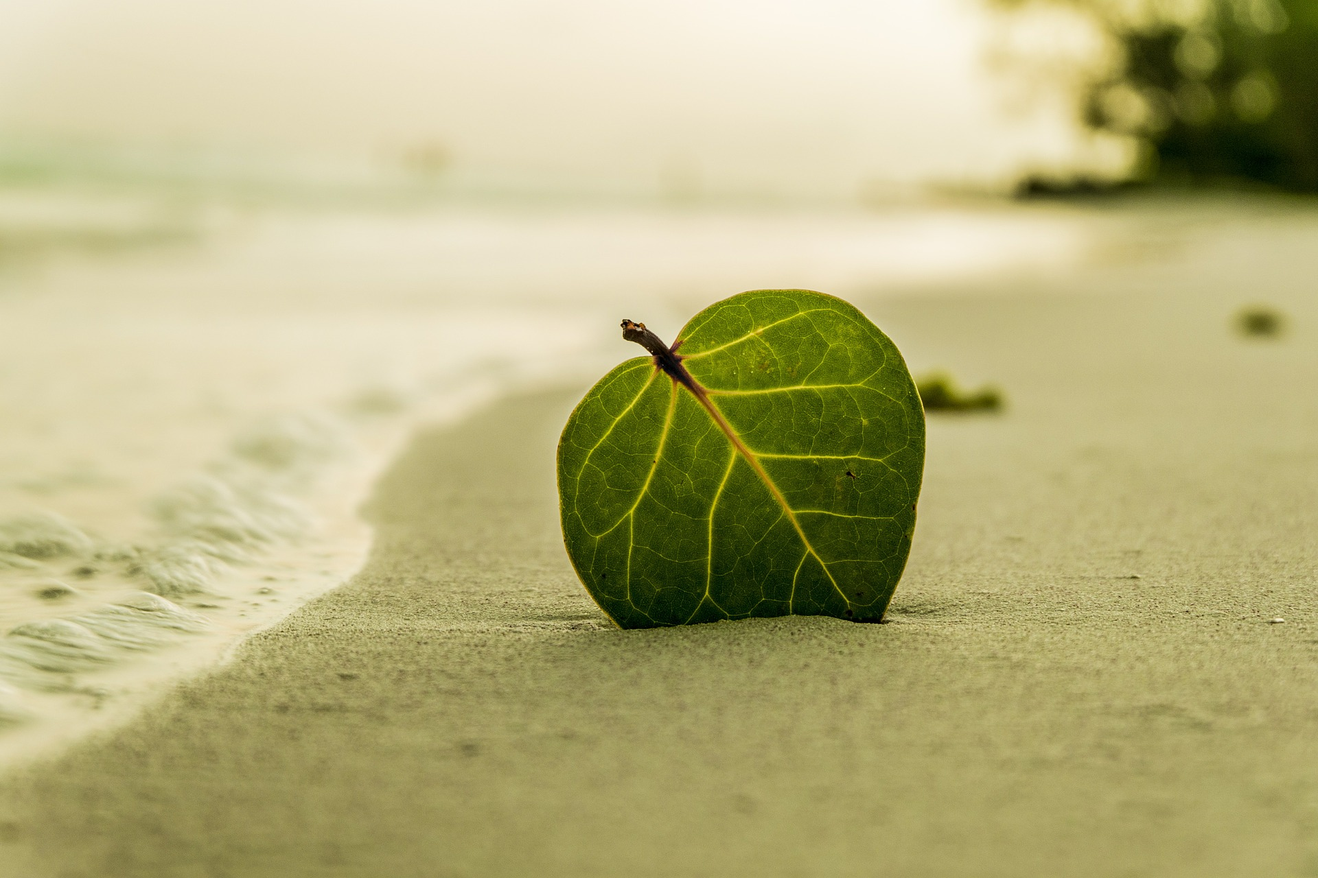 A leaf on a beach to signify the benefits of hypnotherapy from Here to Help Co